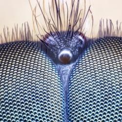 Ritratto di mosca